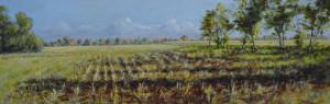 Abel Groenewold gemaaide maisvelden 25,5 x 80 cm acrylverf op paneel