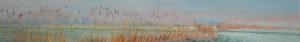 Gertjan Scholte-Albers riet bij Sauwerd 30 x 200 cm olieverf op doek